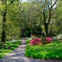 Caerhays - Garden Walk '