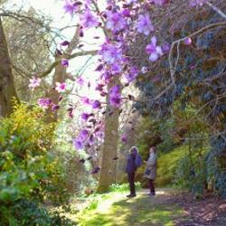 Caerhays -  Garden Walks