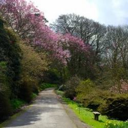 Caerhays -  Garden Walk