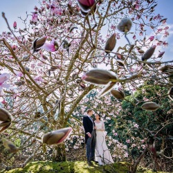 Weddings - Magnolias